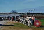 Image of French horsemen Rabat Morocco, 1942, second 7 stock footage video 65675020490