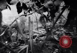 Image of packing supplies Papua New Guinea, 1942, second 50 stock footage video 65675020562