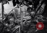Image of packing supplies Papua New Guinea, 1942, second 51 stock footage video 65675020562