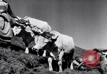 Image of German farmers Germany, 1944, second 30 stock footage video 65675020573