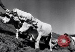 Image of German farmers Germany, 1944, second 31 stock footage video 65675020573