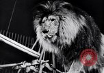 Image of circus performance Berlin Germany, 1944, second 36 stock footage video 65675020575