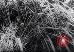 Image of New Guinea Campaign Papua New Guinea, 1944, second 35 stock footage video 65675020581