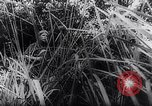 Image of New Guinea Campaign Papua New Guinea, 1944, second 36 stock footage video 65675020581