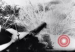 Image of New Guinea Campaign Papua New Guinea, 1944, second 38 stock footage video 65675020581