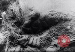 Image of New Guinea Campaign Papua New Guinea, 1944, second 46 stock footage video 65675020581
