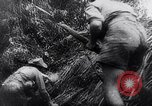 Image of New Guinea Campaign Papua New Guinea, 1944, second 62 stock footage video 65675020581