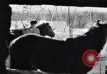 Image of German ski troops in World War 2 Finland, 1943, second 14 stock footage video 65675020588