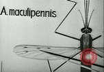 Image of German laboratory mosquito experiments Berlin Germany, 1943, second 13 stock footage video 65675020606