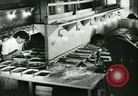 Image of German laboratory mosquito experiments Berlin Germany, 1943, second 26 stock footage video 65675020606