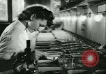 Image of German laboratory mosquito experiments Berlin Germany, 1943, second 32 stock footage video 65675020606