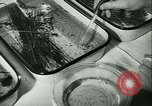 Image of German laboratory mosquito experiments Berlin Germany, 1943, second 37 stock footage video 65675020606