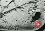 Image of German laboratory mosquito experiments Berlin Germany, 1943, second 40 stock footage video 65675020606