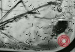 Image of German laboratory mosquito experiments Berlin Germany, 1943, second 42 stock footage video 65675020606