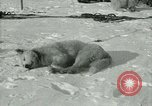 Image of Byrd Expedition Antarctica, 1929, second 53 stock footage video 65675020800