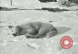 Image of Byrd Expedition Antarctica, 1929, second 54 stock footage video 65675020800