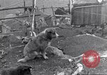 Image of whaler Herman Canadian Arctic Archipelago, 1915, second 39 stock footage video 65675020829