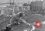 Image of whaler Herman Canadian Arctic Archipelago, 1915, second 40 stock footage video 65675020829