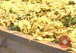 Image of grapes California United States USA, 1967, second 2 stock footage video 65675020972