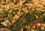 Image of grapes California United States USA, 1967, second 10 stock footage video 65675020972