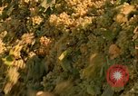Image of grapes California United States USA, 1967, second 15 stock footage video 65675020972