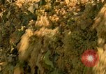 Image of grapes California United States USA, 1967, second 16 stock footage video 65675020972