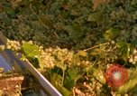 Image of grapes California United States USA, 1967, second 27 stock footage video 65675020972