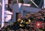 Image of grapes California United States USA, 1967, second 40 stock footage video 65675020972