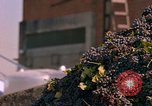 Image of grapes California United States USA, 1967, second 52 stock footage video 65675020972