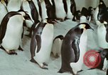 Image of Operation Deep Freeze United States USA, 1975, second 55 stock footage video 65675021084