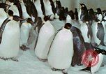 Image of Operation Deep Freeze United States USA, 1975, second 58 stock footage video 65675021084