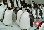 Image of Operation Deep Freeze United States USA, 1975, second 59 stock footage video 65675021084