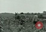 Image of Prisoner of War Camp Southern United States USA, 1944, second 7 stock footage video 65675021140