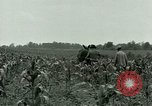 Image of Prisoner of War Camp Southern United States USA, 1944, second 13 stock footage video 65675021140
