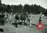 Image of German Prisoners of War France, 1944, second 52 stock footage video 65675021184