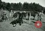 Image of German Prisoners of War France, 1944, second 55 stock footage video 65675021184
