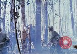Image of Troops of US 503rd Airborne Infantry Regiment assault Hill 875 South Vietnam, 1967, second 40 stock footage video 65675021188