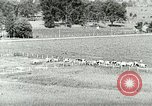 Image of a modern dairy Berea Kentucky United States USA, 1933, second 10 stock footage video 65675021250