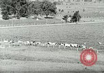 Image of a modern dairy Berea Kentucky United States USA, 1933, second 17 stock footage video 65675021250