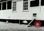 Image of poultry farm Berea Kentucky United States USA, 1933, second 27 stock footage video 65675021251
