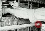 Image of poultry farm Berea Kentucky United States USA, 1933, second 29 stock footage video 65675021251