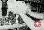 Image of poultry farm Berea Kentucky United States USA, 1933, second 30 stock footage video 65675021251
