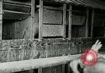 Image of poultry farm Berea Kentucky United States USA, 1933, second 31 stock footage video 65675021251