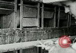 Image of poultry farm Berea Kentucky United States USA, 1933, second 32 stock footage video 65675021251