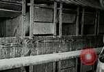 Image of poultry farm Berea Kentucky United States USA, 1933, second 35 stock footage video 65675021251