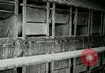 Image of poultry farm Berea Kentucky United States USA, 1933, second 36 stock footage video 65675021251
