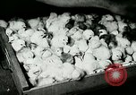 Image of poultry farm Berea Kentucky United States USA, 1933, second 52 stock footage video 65675021251