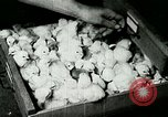 Image of poultry farm Berea Kentucky United States USA, 1933, second 53 stock footage video 65675021251