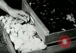 Image of poultry farm Berea Kentucky United States USA, 1933, second 54 stock footage video 65675021251