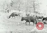 Image of dairy farm Berea Kentucky United States USA, 1933, second 12 stock footage video 65675021270